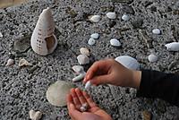 Amami_beach_shell